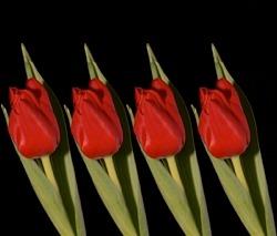 Jak zachowaćświeżość kwiatów ciętych